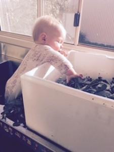 Kates little helper